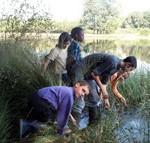 Au bord de l'étang de Brach